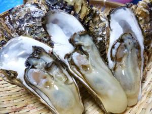 牡蠣パックむき身200gx2パック[1]